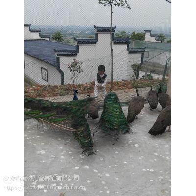 上海孔雀,江苏孔雀,浙江孔雀,山东孔雀,河南孔雀供应