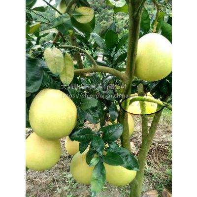 果场直销梅州大埔山禾有机蜜柚
