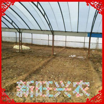 新旺兴农种植大棚8304热镀锌钢架大棚