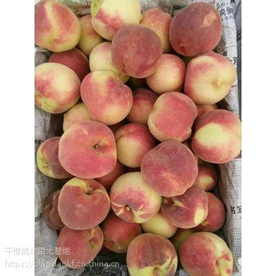 桃树苗新品种 桃树苗基地 桃树苗价格