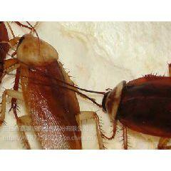 南昌灭蟑螂公司,灭蟑螂,一次性根除蟑螂