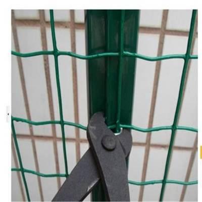 养殖围栏防护网 多种规格荷兰网现货 绿色浸塑铁网围栏
