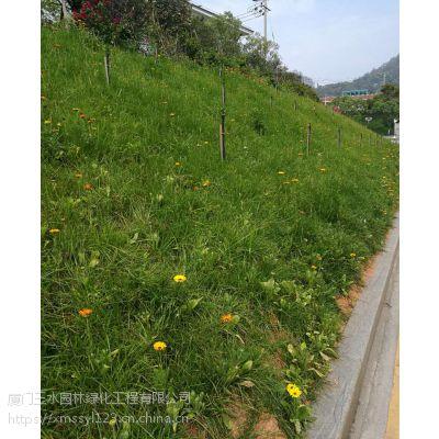 攀枝花三水园林公路护坡草种资材岩质边坡绿化施工工艺
