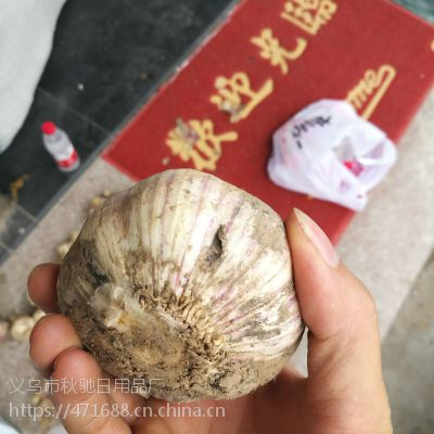 跑江湖新鲜大蒜低价批发地摊优质河南新鲜紫皮大蒜头现货产地直销批发价1.7一斤