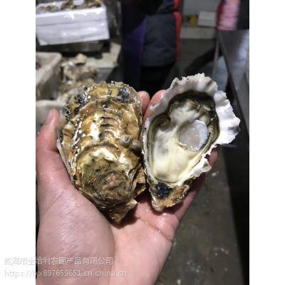长沙鲜活生蚝养殖批发价格鲜活贝类海鲜