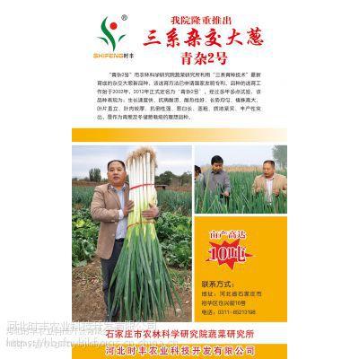 供应河北时丰农业科技开发有限公司杂交大葱(青杂二号A4)