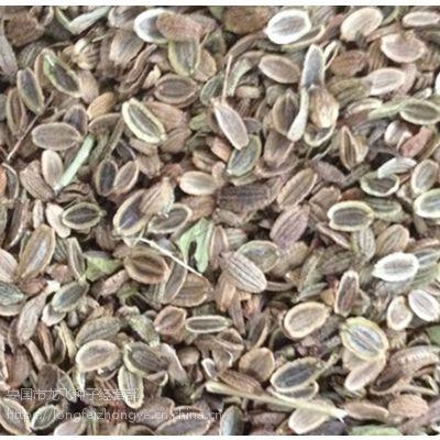 2017年纯新中药材防风种子价格优惠技术指导回收产品