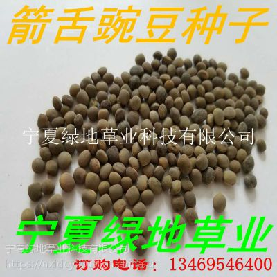 批发绿肥种子【箭舌豌豆种子】牛羊饲料 量大从优 优质品种