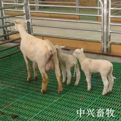 批发羊床塑料漏粪板羊床漏粪板生产厂家 羊漏粪地板