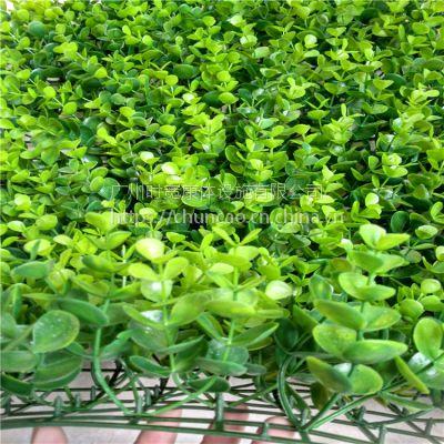 外墙背景墙立体墙专用时宽仿真植物人工草皮,办公室内墙体装饰大尤加利塑料草