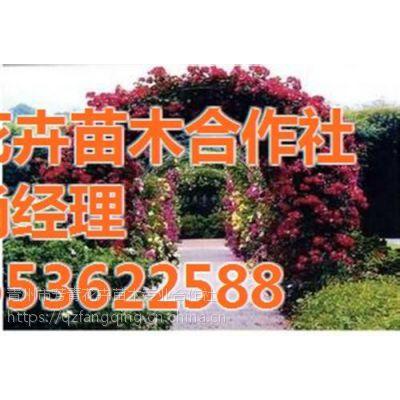 青州园林绿化苗木、园林绿化苗木、芳青花卉苗(在线咨询)
