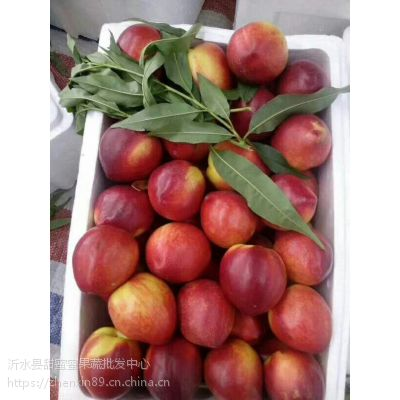 油桃市场大量批发 哪里油桃量大价格便宜