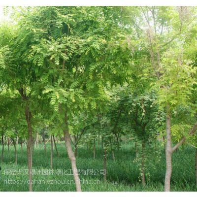 保定大汉绿洲供应10公分刺槐