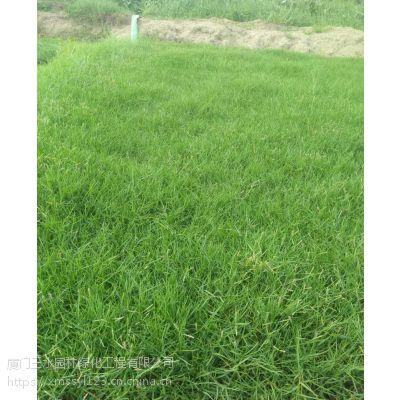 四川甘孜公园小区绿化耐修剪草坪草种有哪些?