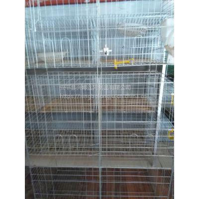 湖南鸽子笼批发,3层12位鸽笼价格 尺寸 兴博优质养鸽笼