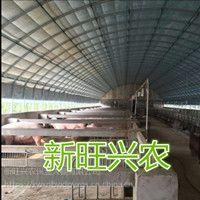 新旺兴农养殖大棚8520热镀锌钢架大棚生产