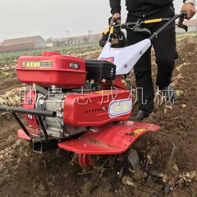 果园自走式除草机 志成7.5马力手推式旋耕机 农耕种植机械