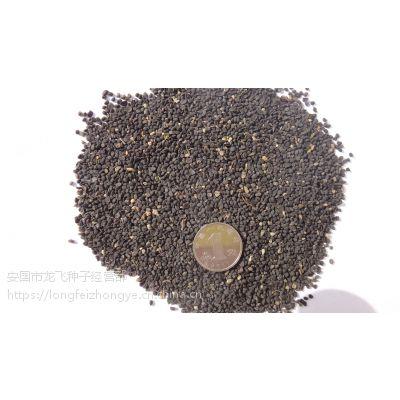 保定2017年中药材黄芩种子价格优惠纯新货回收产品效益稳定