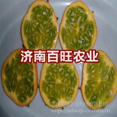 天赐良果--火星果种子 海参果种子 火参果种子
