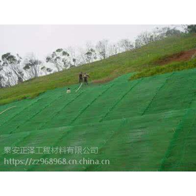 植草护坡的产品有哪些 三维植被网可以种草嘛