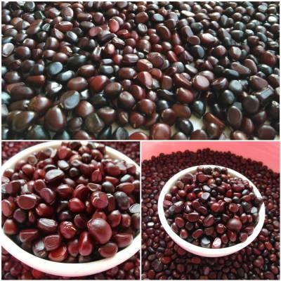正宗赤芍种子为棕红色发芽率96%以上