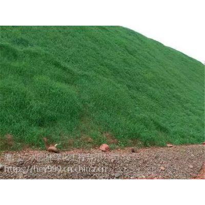 设计要求草灌混播植草绿化昆明寻甸县专卖种子