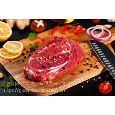广西山水牛-生鲜牛肉-进口牛肉-肉牛养殖-母牛-牛犊售卖
