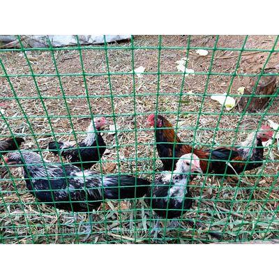 养鸡围栏@徐闻养鸡围栏@养鸡围栏生产厂家
