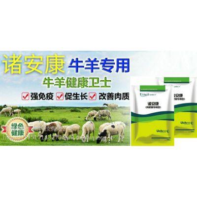 牛羊催肥就用牛羊专用诸安康牛喂什么长得快