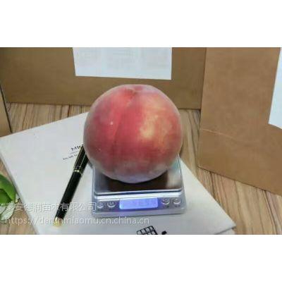 珍品王桃苗一棵多少钱、3公分珍品王桃苗价格