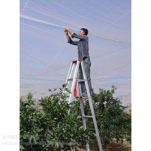 温室大棚园林花卉防虫网40-60目质量好抗老化