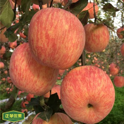 正苹优果 70mm 陕西洛川红富士 批发量大更加优惠 有机苹果