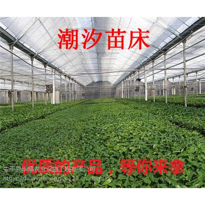 苗床价格/优点/名称规格/苗床生产厂家