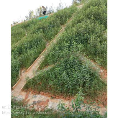三水园林供应成都高速公路铁路边坡绿化草种混播
