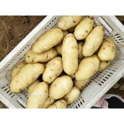 土豆代办直销处 土豆今日市场价格