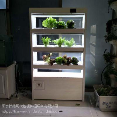 植物净化器 厂家全智能植物工厂有机蔬菜种菜机城市学校试验教材