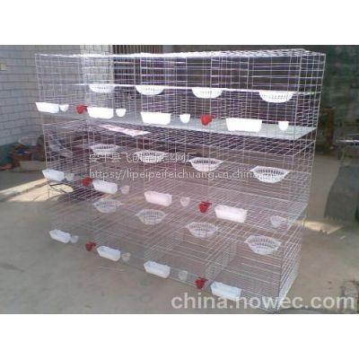 自动门鸽笼【十二位鸽子笼】合肥养殖鸽笼子采购都找安平飞创