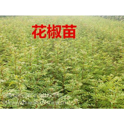 2018年种植什么效益高----花椒苗