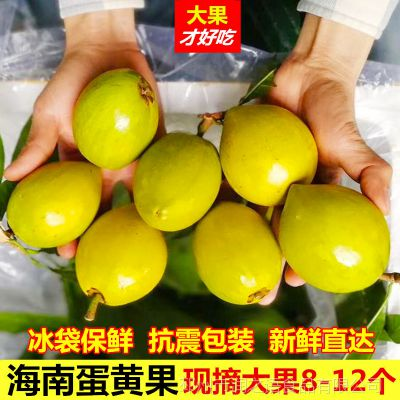 蛋黄果 新鲜鸡蛋果5斤装当季水果采摘费海南狮头果精选大果