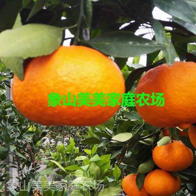 正宗柑橘苗爱媛34号,晚熟杂柑,日本柑桔新品种,宜设施栽培