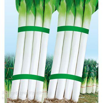 供应河北时丰农业科技开发有限公司蔬菜大葱新种子(高抗倒冀葱三号大葱A09)