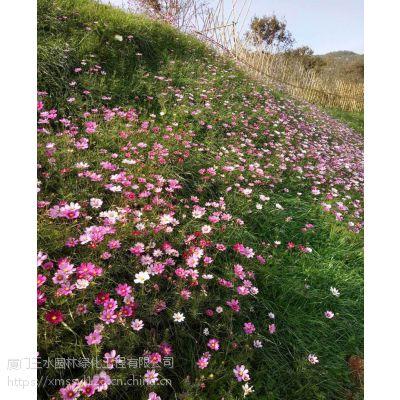 四川成都二月兰花籽耐寒耐荫边坡花种销售