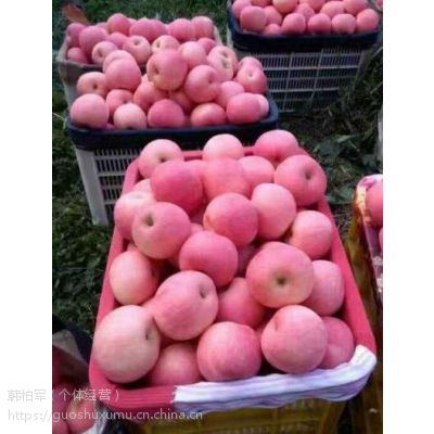 山东红富士苹果行情分析