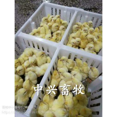 鸡苗孵化筐种鸡场专用运输箱雏鸡箱规格