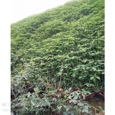 四川三水园林高速边坡植草形式与草种配比以及播种量详解