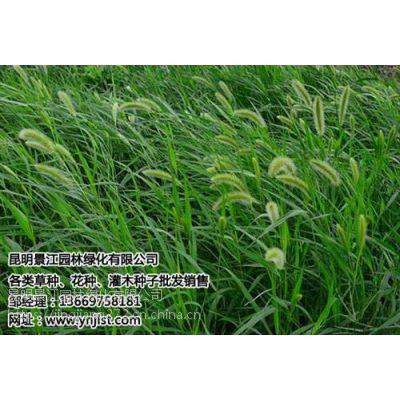 景江园林绿化(在线咨询)_云南绿化草种_云南绿化草种哪家便宜