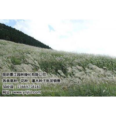 绿化草种多少钱一斤,宣威绿化草种,景江园林绿化