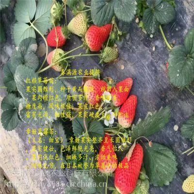 法兰地草莓苗压苗