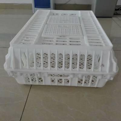 供应小鸽子养殖周转塑料笼 成鸡周转筐 兔子周转筐