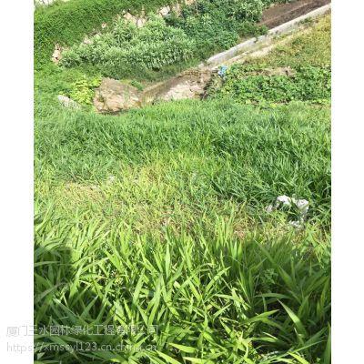 四川三水园林攀枝花米易县草种供应商早熟禾多少钱一斤?
